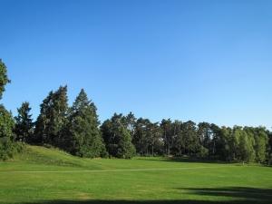 Idyllic Summer Park Scenery